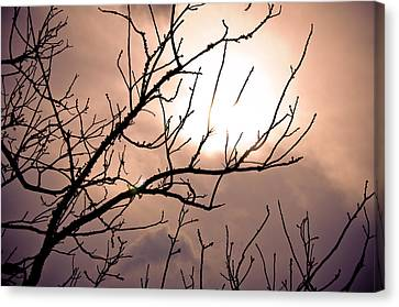 Hindered Sunset Canvas Print by Victoria Lawrence