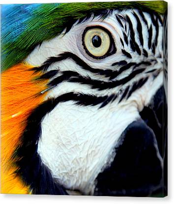 His Watchful Eye Canvas Print by Karen Wiles