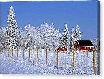 Hoarfrost On Trees Around Red Barns Canvas Print by Mike Grandmailson