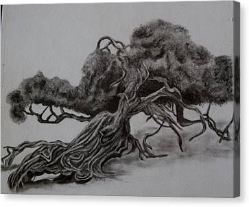 Hobbit Tree Canvas Print by Joan Pye