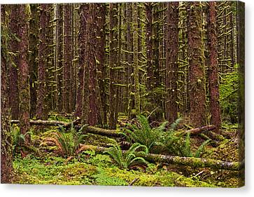 Hoh Rainforest Canvas Print by Mark Kiver