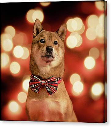 Holiday Outfit Canvas Print by DancingShiba