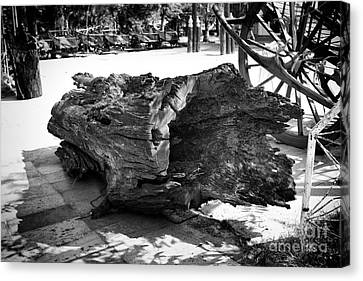 Canvas Print featuring the photograph Hollow Log by Thanh Tran