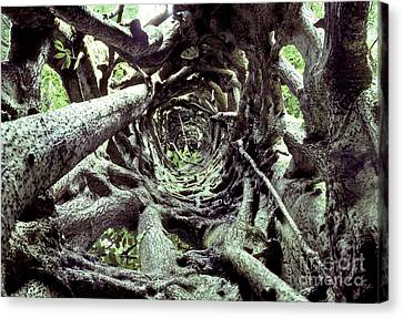 Hollow Trunk Of Strangler Fig Canvas Print