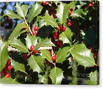 Holly 3 Canvas Print