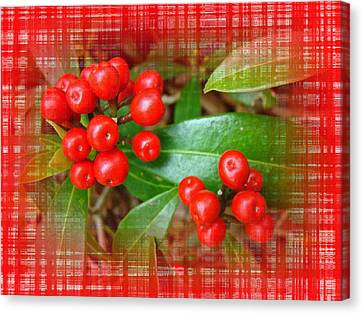 Holly Berries Canvas Print by Mother Nature