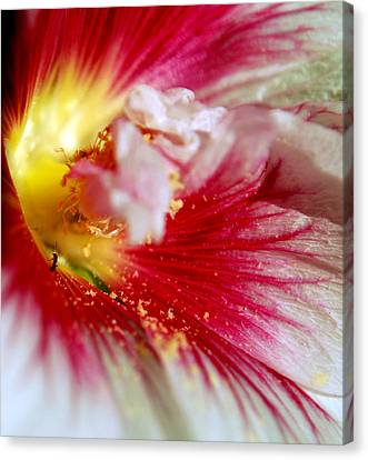 Hollyhock And The Ant Canvas Print