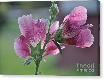 Canvas Print featuring the photograph Hollyhocks by Tamera James