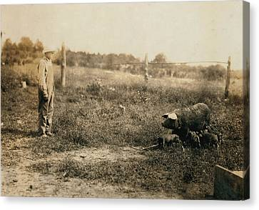Homer Hunt Tending Pigs, Rockcastle Canvas Print by Everett