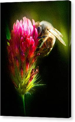 Honey Bee Canvas Print by Gary Rose