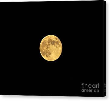 Honey Moon Canvas Print by Al Powell Photography USA