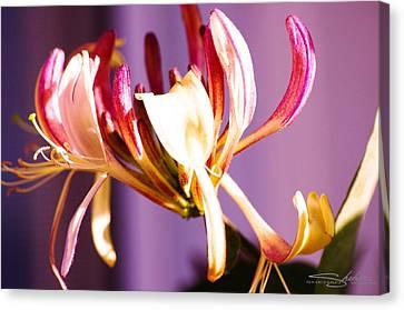 Honey Suckle Flower Close Up Canvas Print