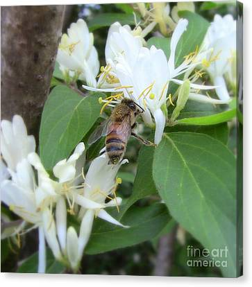 Canvas Print featuring the photograph Honeybee Collecting Pollen by Renee Trenholm