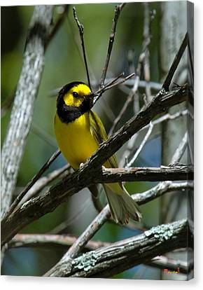 Canvas Print featuring the photograph Hooded Warbler Dsb166  by Gerry Gantt
