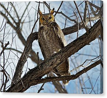 Horned Owl In Tree Canvas Print by Stephen  Johnson