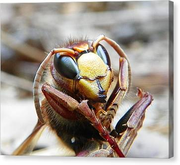 Canvas Print featuring the photograph Hornet by Chad and Stacey Hall