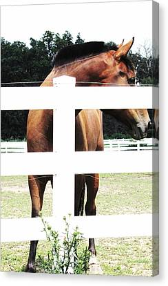 Horse-4 Canvas Print by Todd Sherlock