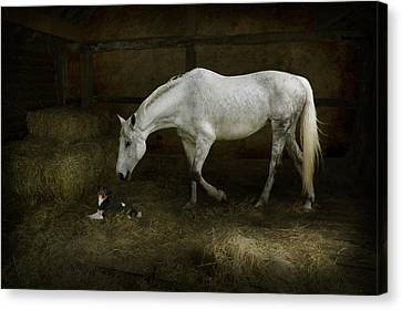 Horse And Puppy In Stable Canvas Print by Ethiriel  Photography