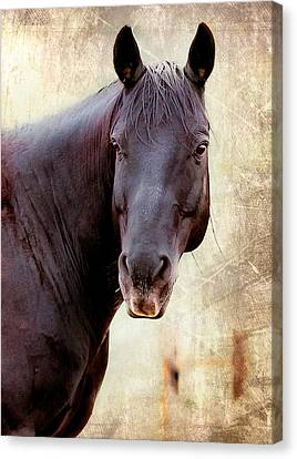 Canvas Print featuring the photograph Horse  by Anna Rumiantseva