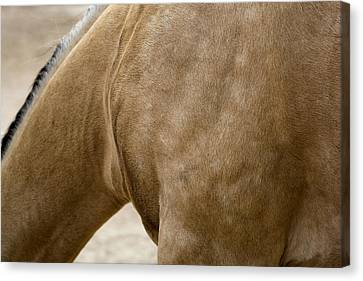 Canvas Print featuring the photograph Horse Bending Neck by Lorraine Devon Wilke