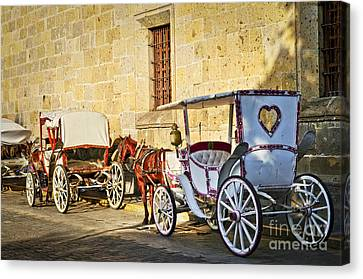 Horse Drawn Carriages In Guadalajara Canvas Print by Elena Elisseeva