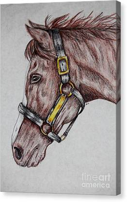 Horse Head 1 Canvas Print