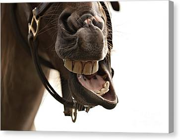 Horse Humour Canvas Print by Heather Swan