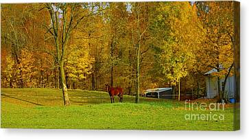Horse In Autumn Canvas Print by Kathleen Struckle
