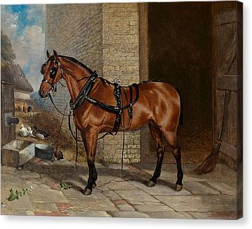 Horse In Harness Canvas Print