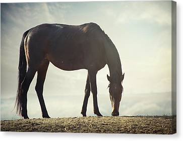 Horse In Wild Canvas Print by Arman Zhenikeyev - professional photographer from Kazakhstan