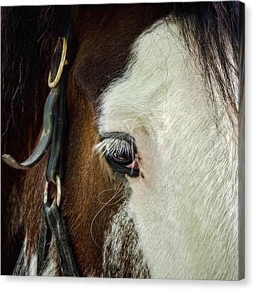 Horse Canvas Print by Jana Smith
