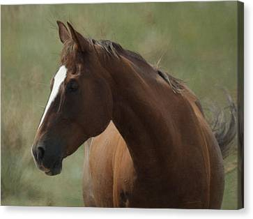 Horse Painterly Canvas Print by Ernie Echols