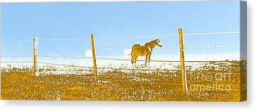 Horse Pasture Revblue Canvas Print by Paulette B Wright