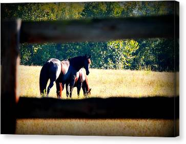 Canvas Print featuring the photograph Horse Photography by Peggy Franz