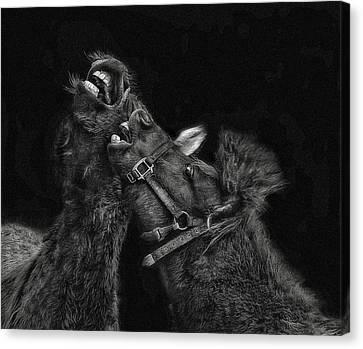Horse Play Canvas Print by Pat Abbott