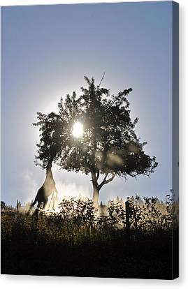 Canvas Print featuring the photograph Horse Reaching For Apples by Michael Dohnalek