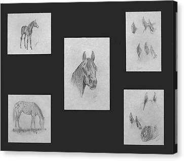 Canvas Print featuring the painting Horse Study by Alethea McKee