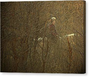 Horseback In The Garden Canvas Print by Lenore Senior
