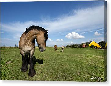 Horsepower Canvas Print by Robert Lacy