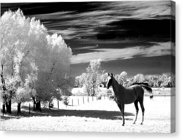 Horses Black White Surreal Nature Landscape Canvas Print by Kathy Fornal