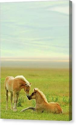 Horses Foals In Field Canvas Print by Vittorio Ricci - Italy