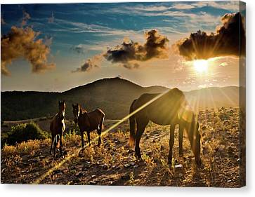 Horses Grazing At Sunset Canvas Print by Finasteride