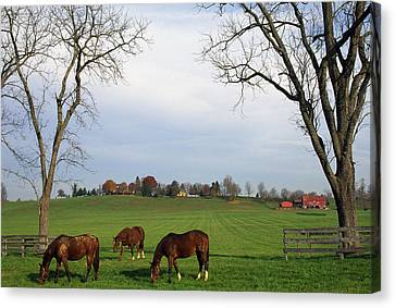 Horses Grazing Canvas Print by Natural Selection Tony Sweet