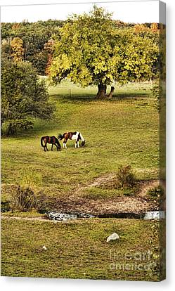 Horses Canvas Print by HD Connelly
