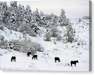 Horses In The Snow Canvas Print by John Brink