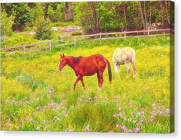 Horses Paradise Canvas Print by Karol Livote