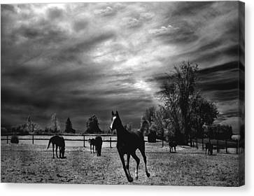 Horses Running Black White Surreal Nature Landscape Canvas Print by Kathy Fornal