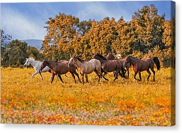 Horses Running Free Canvas Print by Susan Candelario