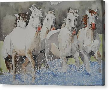 Horses Thru Water Canvas Print