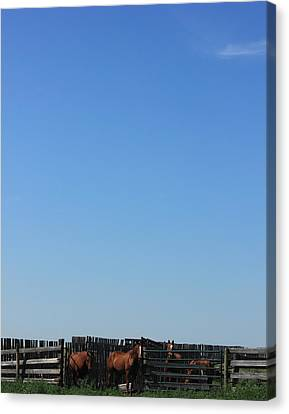 Horses Under The Alberta Prairie Sky. Canvas Print